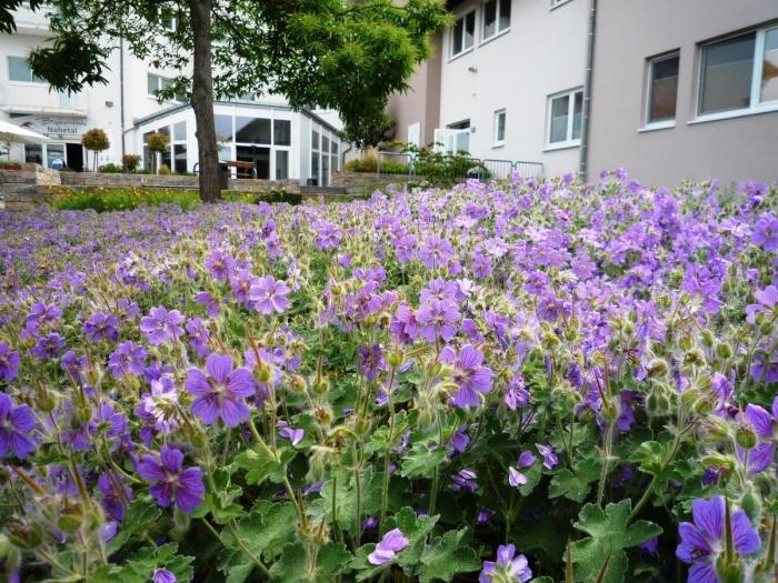 Fahrradfahrerfreundliches Hotel Cafe Nahetal in Gensingen